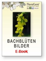 E-Book mit Bildern der Bachblten
