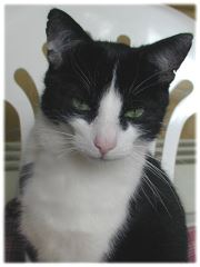FloraCura Presseinfo Katze bei Vogelgrippe