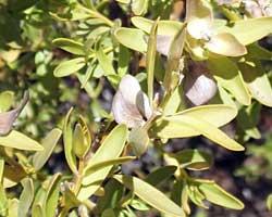 Australian Bush Flower