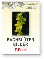 E-Book mit Bildern der Bachblüten