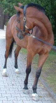 FloraCura Presseinfo Pferd